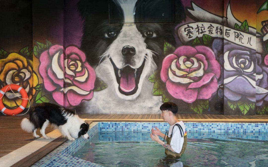 $500,000 Doggie Mansion