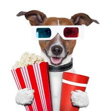 Plano, Texas theater allows dogs and offers bottomless wine